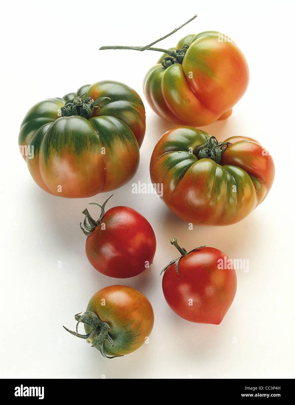 La vie toujours Les tomates Photo Stock