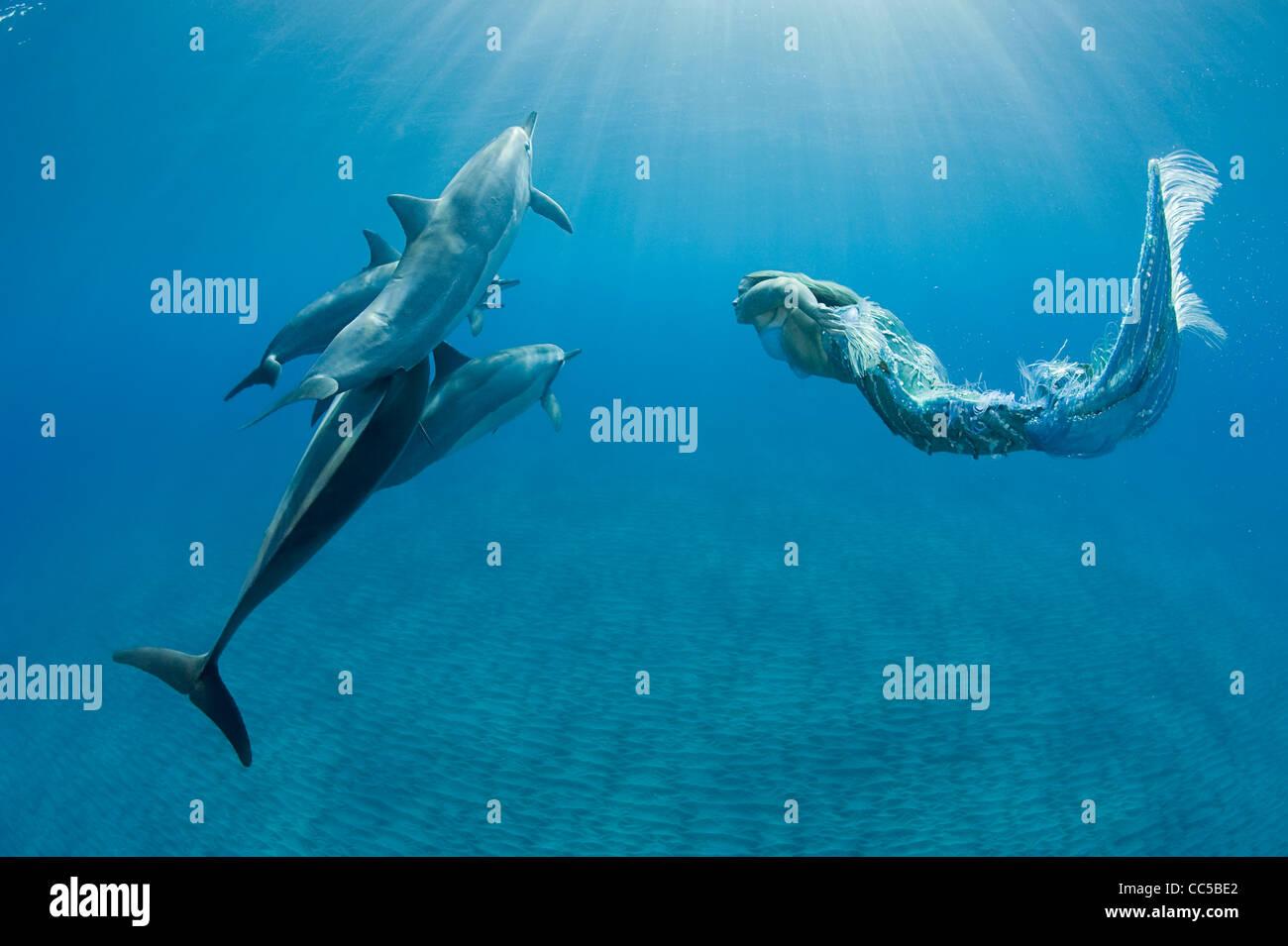 Sirène nage avec les dauphins, Hawaiian Kona, Hawaii Banque D'Images
