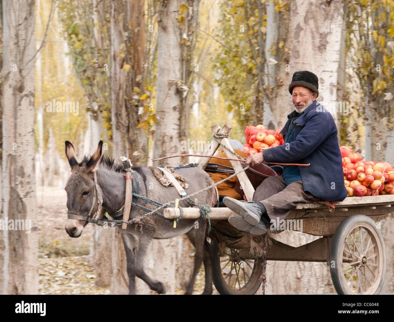 Vendeur de fruits ouïghour au volant d'une charrette à âne, Xinjiang, Chine Photo Stock