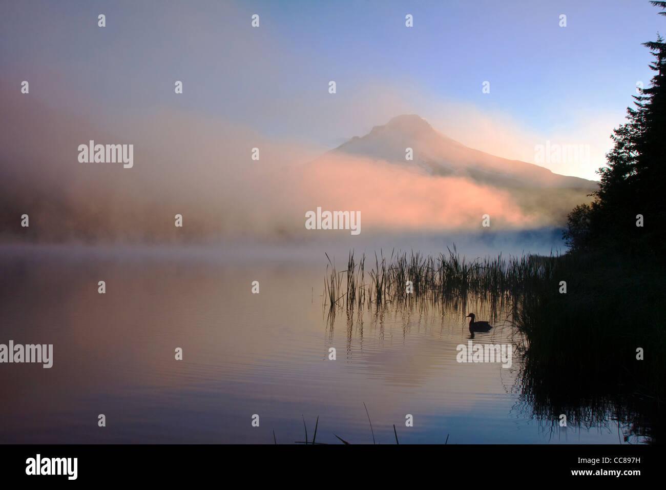 Lever du Soleil sur le lac Trillium brumeux avec un canard flottant dans l'avant-plan et Mt Hood derrière Photo Stock