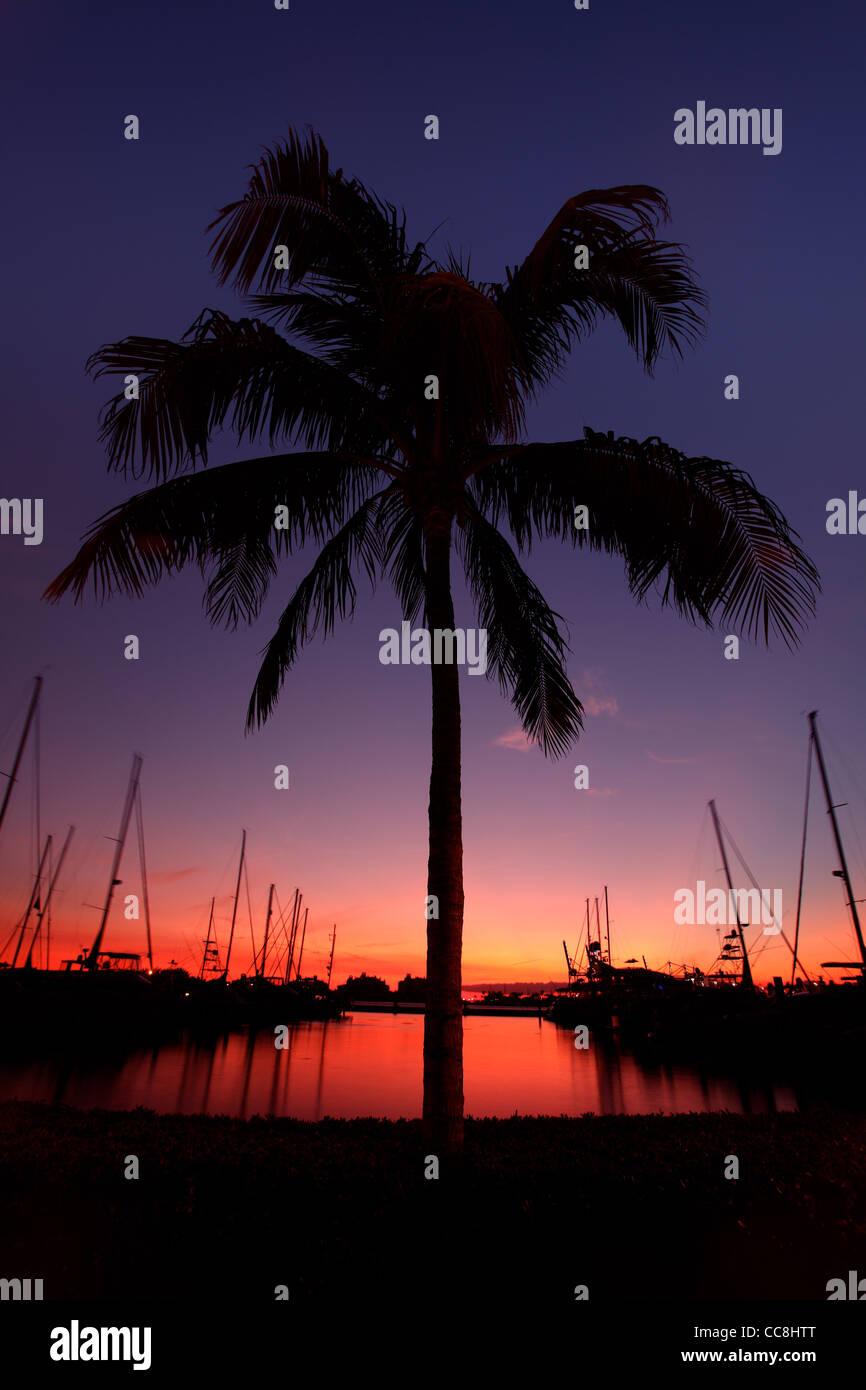 Miami Palm Tree Silhouette au coucher du soleil Photo Stock