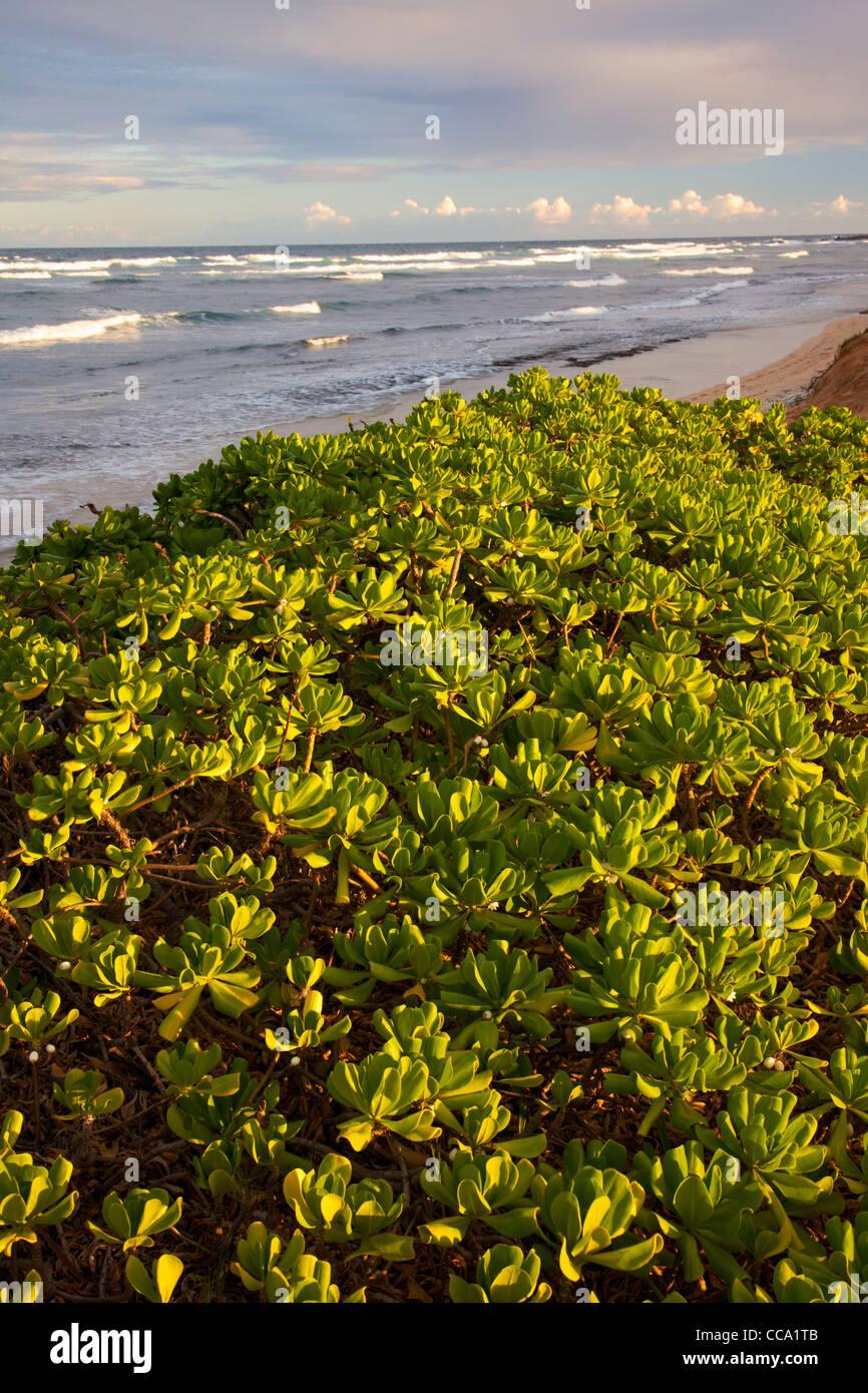 Nukolii Beach, également connu sous le nom de cuisines Beach, Kauai, Hawaï. Photo Stock