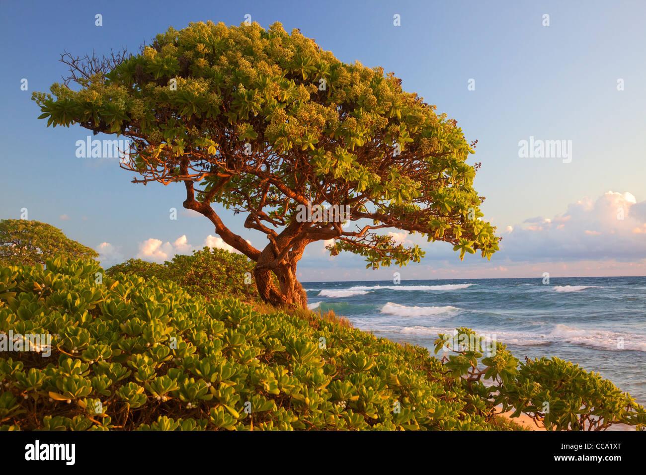 J'Nukoli Beach, également connu sous le nom de cuisines Beach, Kauai, Hawaï. Photo Stock