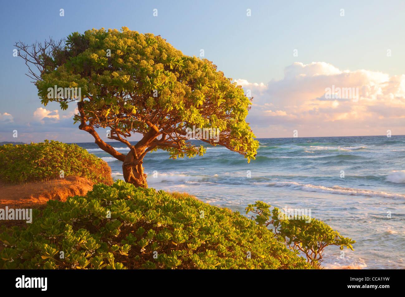J'Nukoli Beach, également connu sous le nom de cuisines Beach, Kauai, Hawaï. Banque D'Images