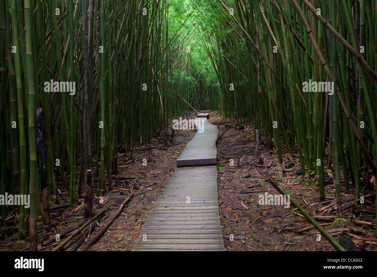 Temperate Bamboo Forest Photos Temperate Bamboo Forest Images Alamy