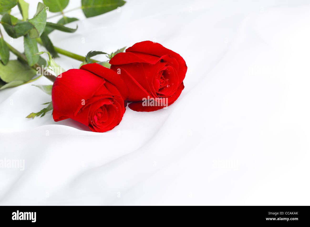Rose Rouge Fleur Sur Soie Douce Romantique Banque D Images Photo