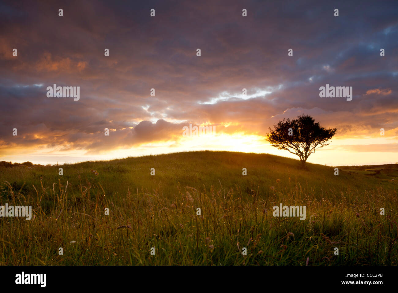 Arbre isolé au coucher du soleil, dans le comté de Mayo, Irlande. Photo Stock