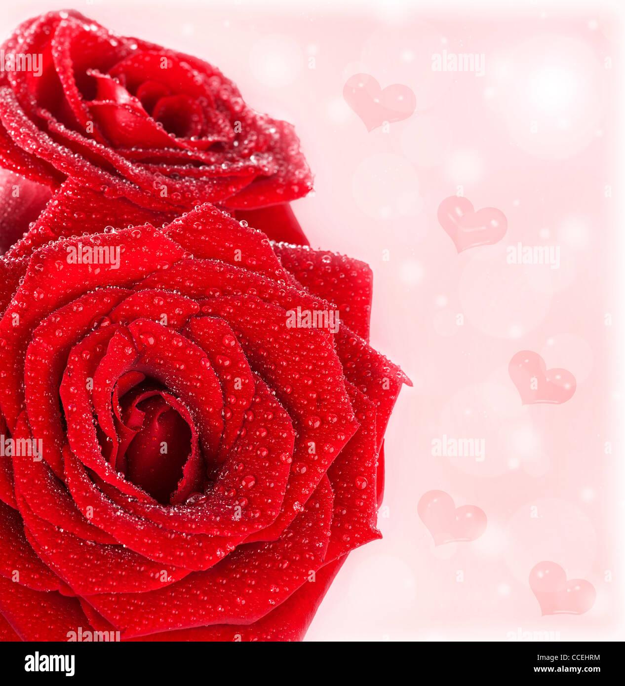 belles roses rouges fronti re avec coeurs r sum fond de carte de vacances humide frais fleurs. Black Bedroom Furniture Sets. Home Design Ideas