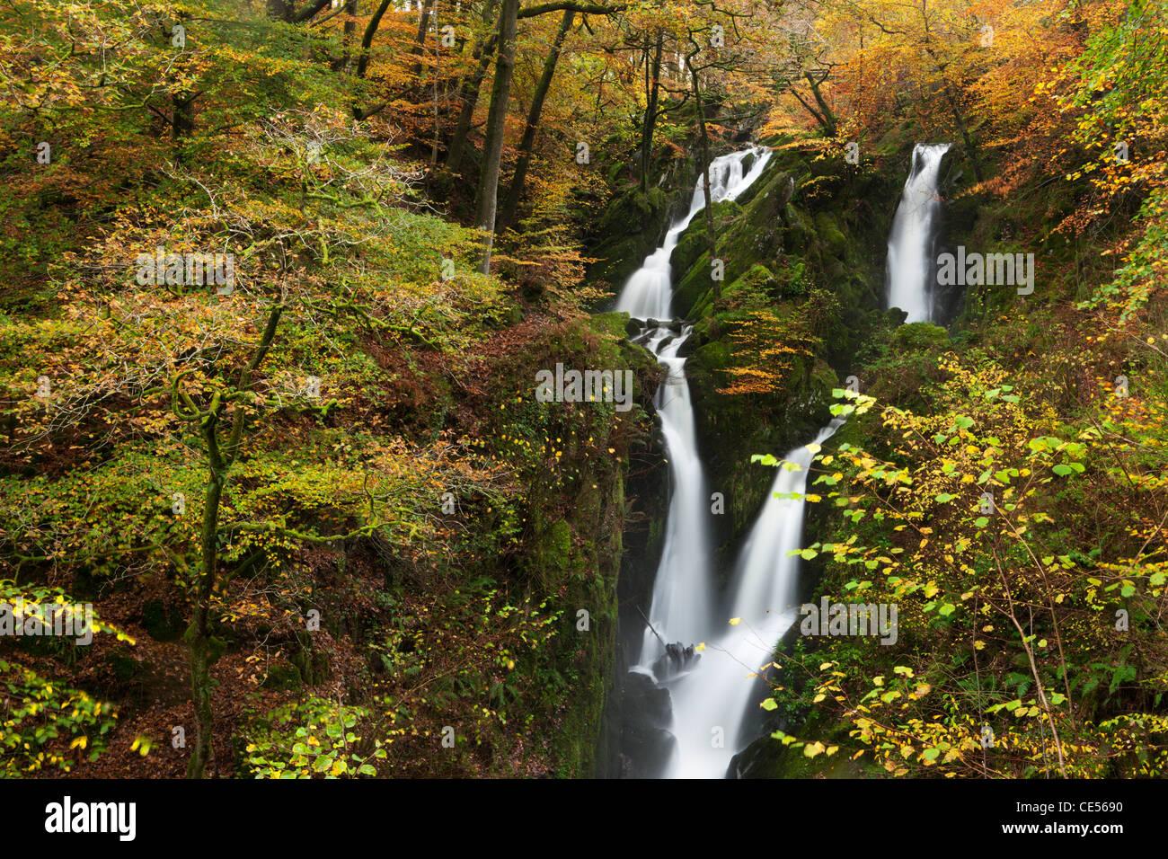 Ghyll Stock vigueur cascade bordée de feuillage de l'automne, Ambleside, Lake District, Cumbria, Angleterre. Photo Stock