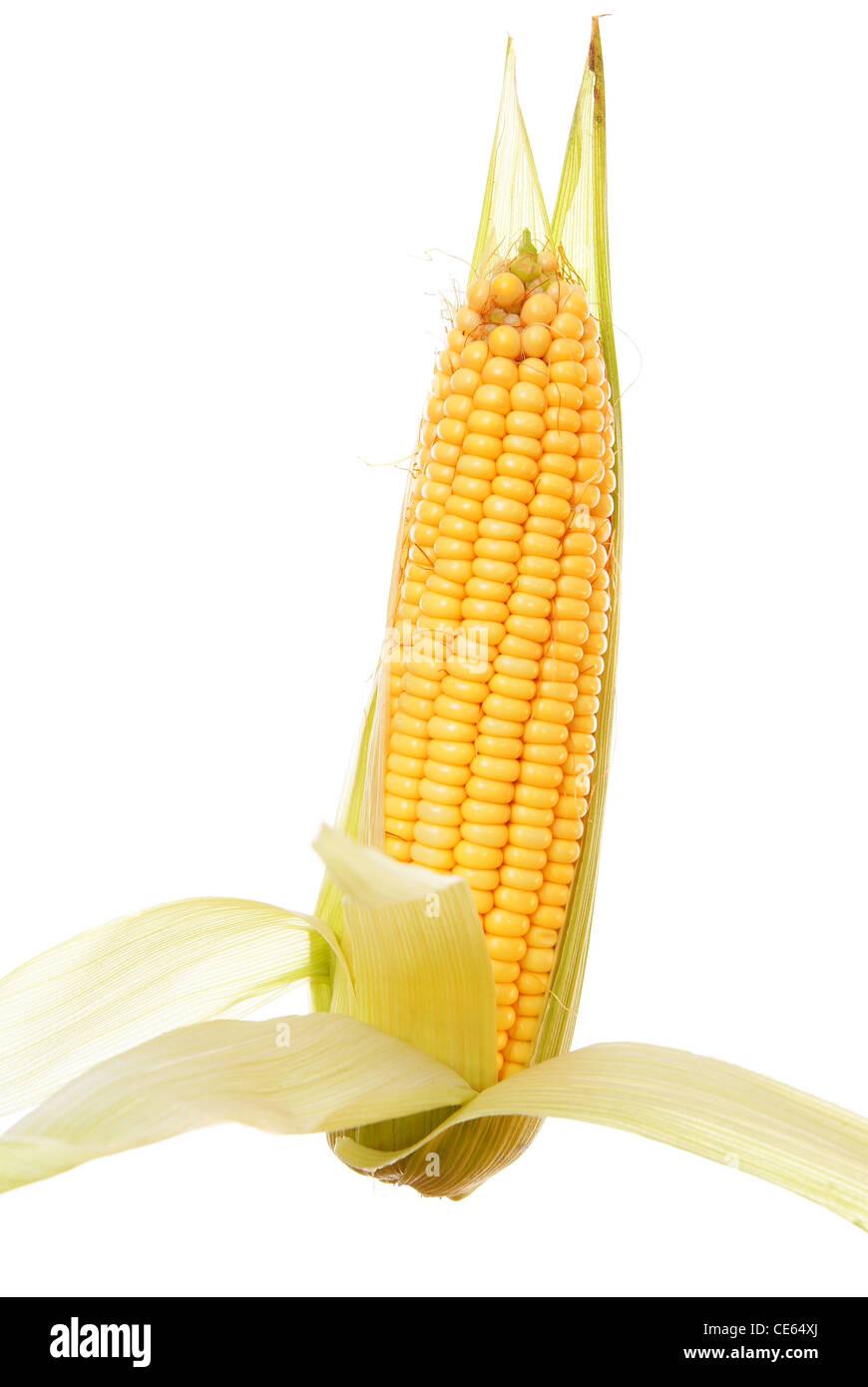 Les matières et le maïs mûr sur fond blanc Photo Stock
