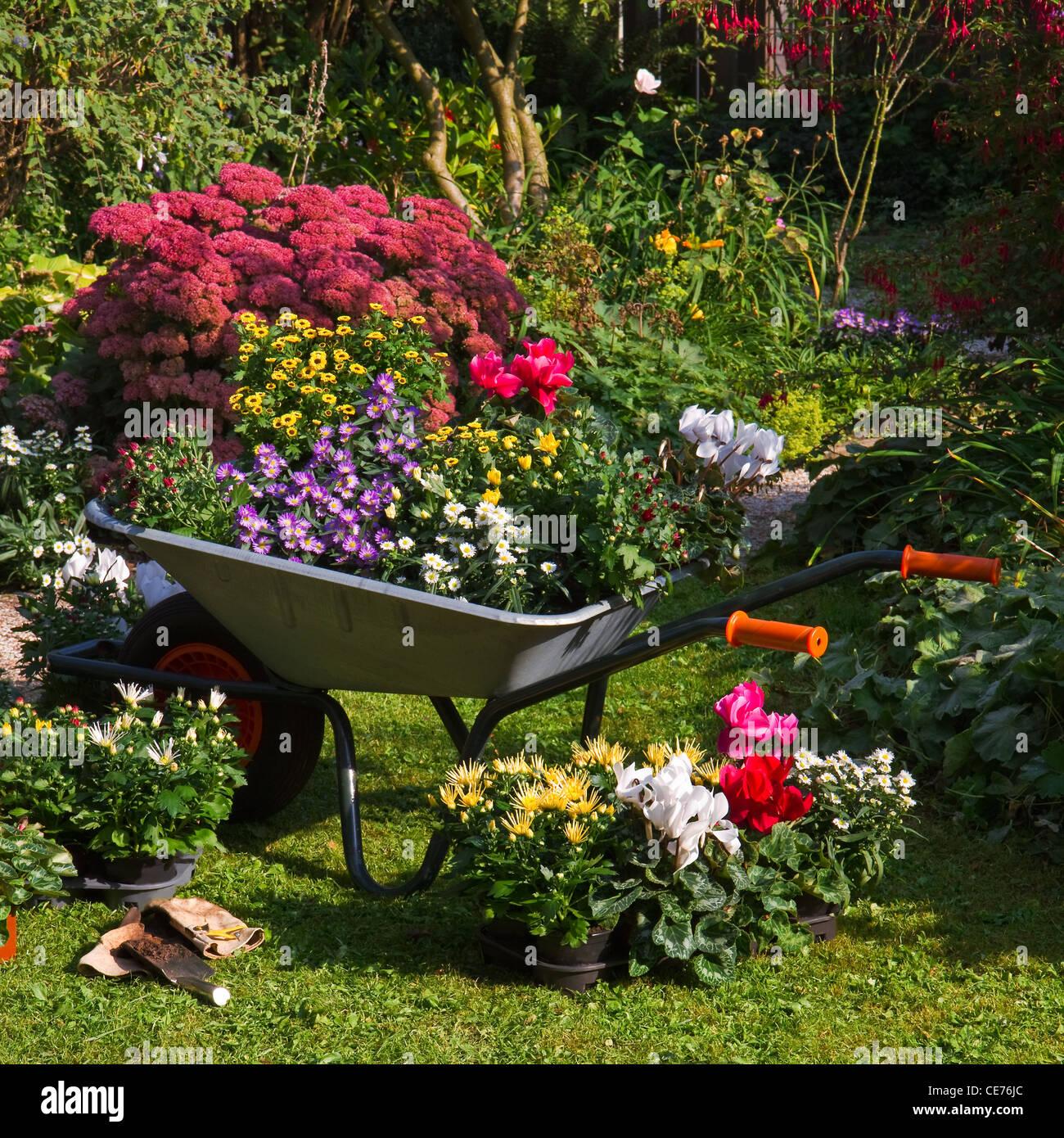 Plante A Planter En Septembre brouette et plateaux avec de nouvelles plantes - se préparer