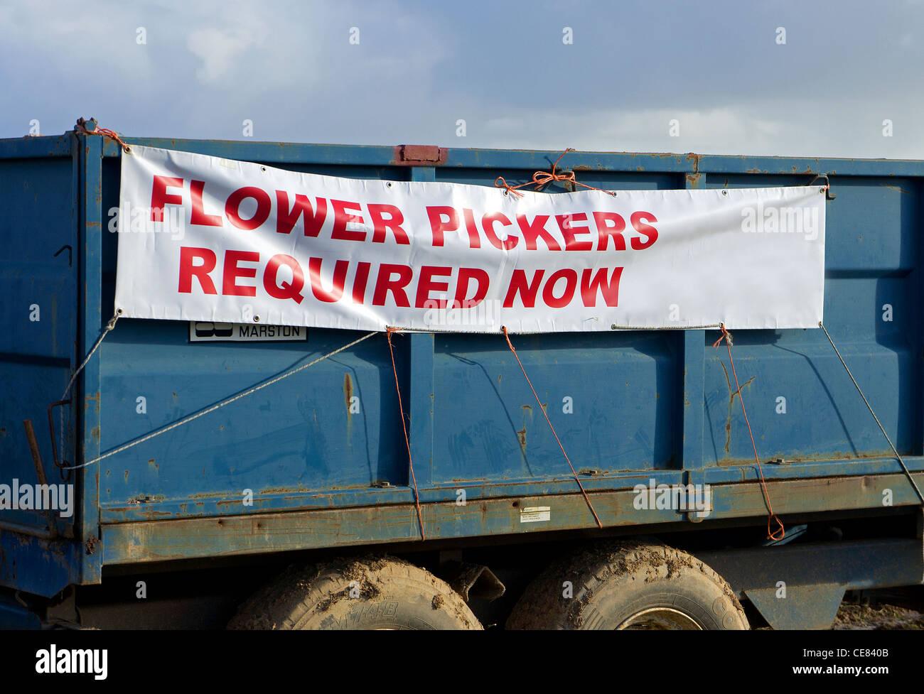 Dans une publicité pour les cueilleurs de fleurs à Cornwall, UK Photo Stock