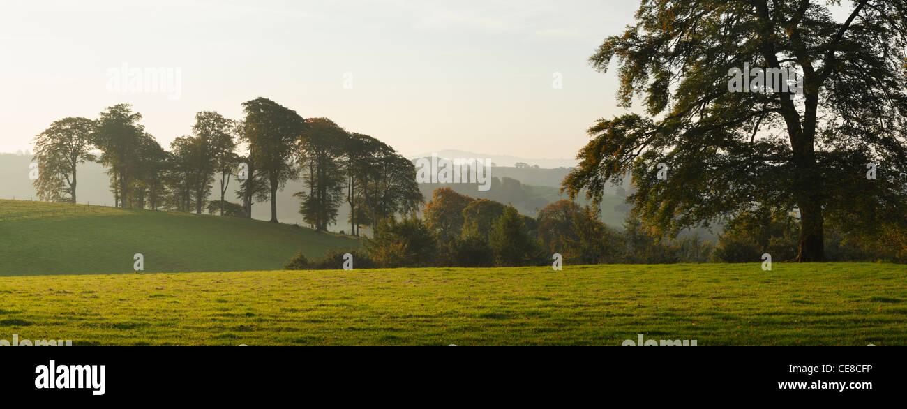 Le Cricket Saint Thomas d'Automne dans le domaine. Le Somerset. L'Angleterre. UK. Photo Stock