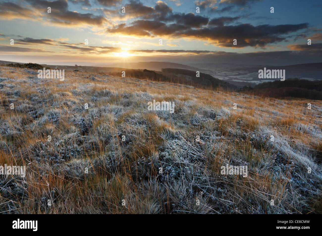 Balise Selworthy, hiver le lever du soleil. Holnicote Estate. Parc National d'Exmoor. L'Angleterre. UK. Photo Stock