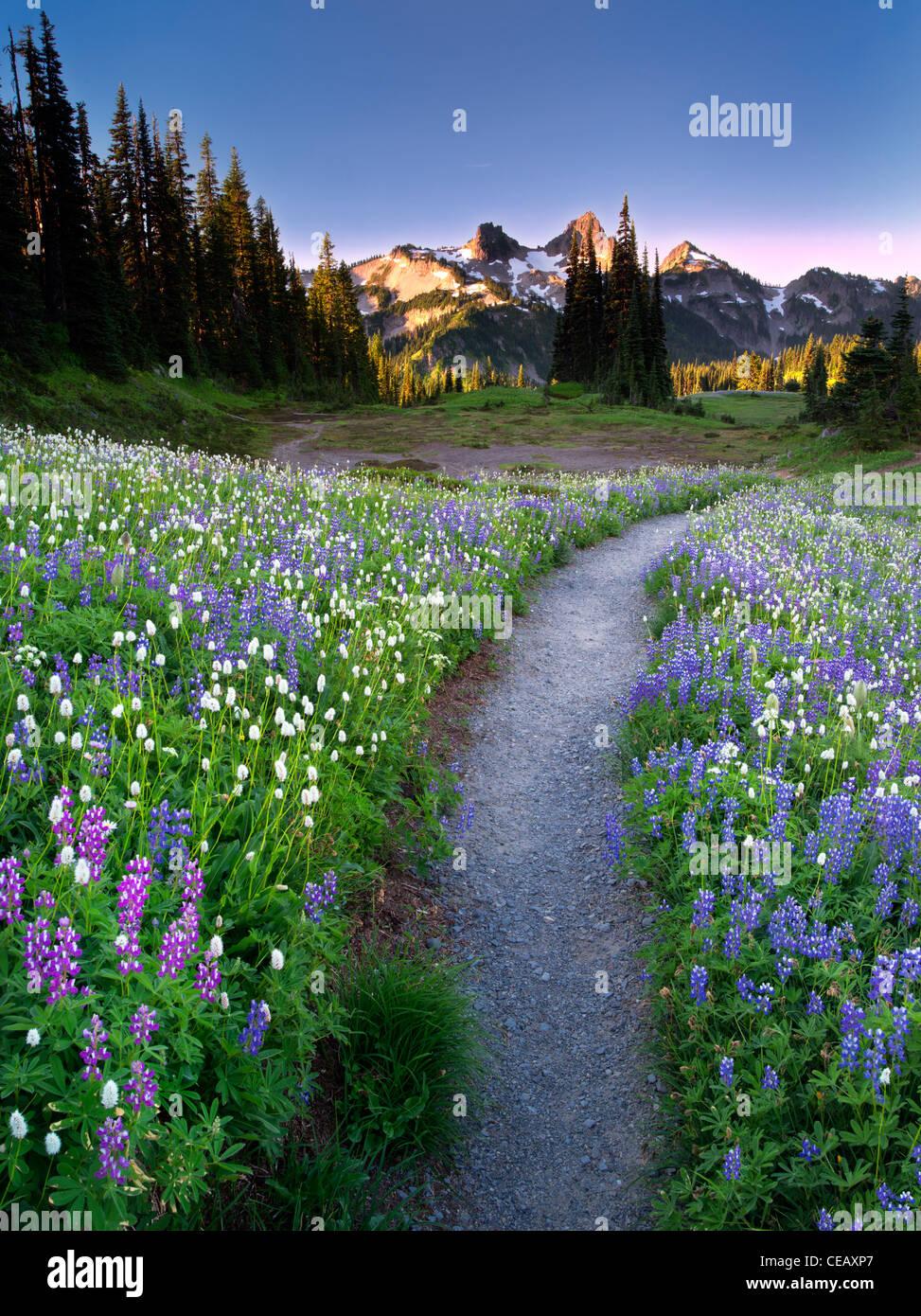 Fleurs sauvages, chemin et montagnes. Tatoosh Mt Rainier National Park, Washington Photo Stock