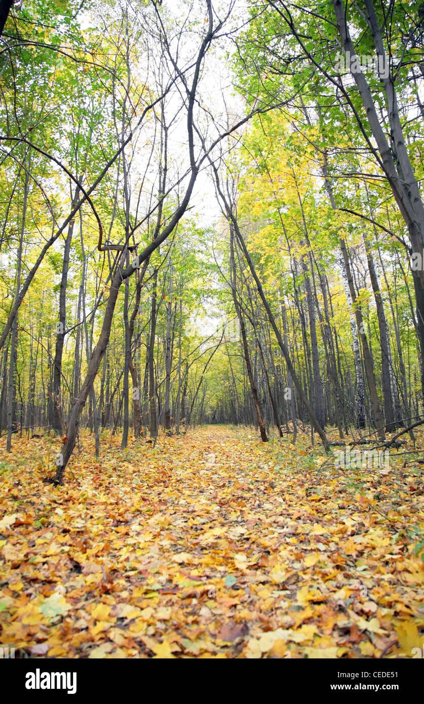 Sentier dans les feuilles tombées dans le bois Photo Stock
