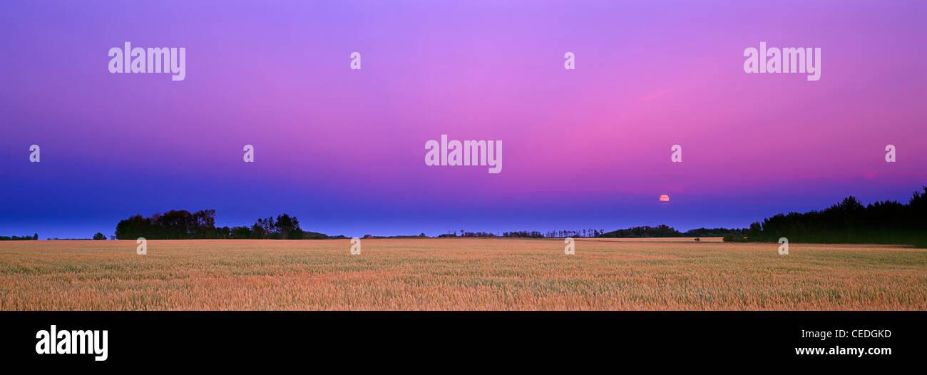 Lune colorés se lever sur un champ de blé dans les prairies de la Saskatchewan, Canada Photo Stock
