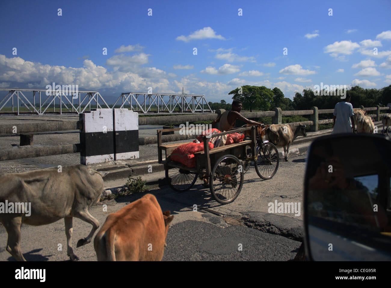 Les animaux sur les routes Photo Stock