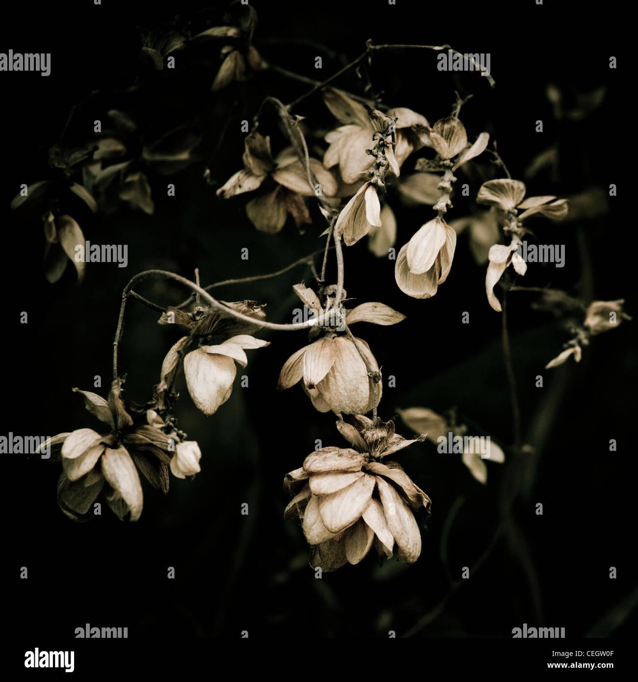 Flétrissement des fleurs Photo Stock
