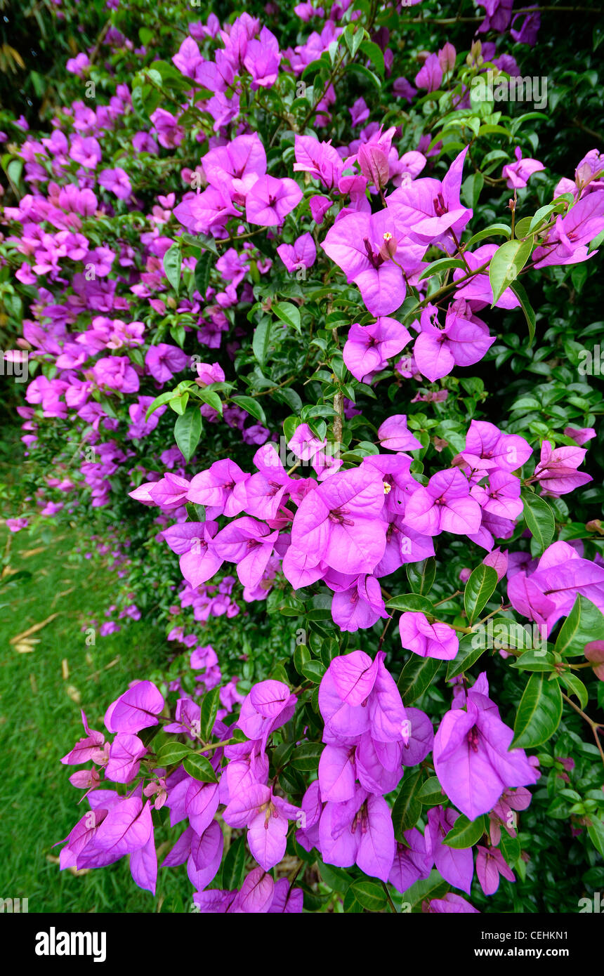 Hémisphère Sud fleurs dans jardin d\'hiver de l\'Auckland Domain ...