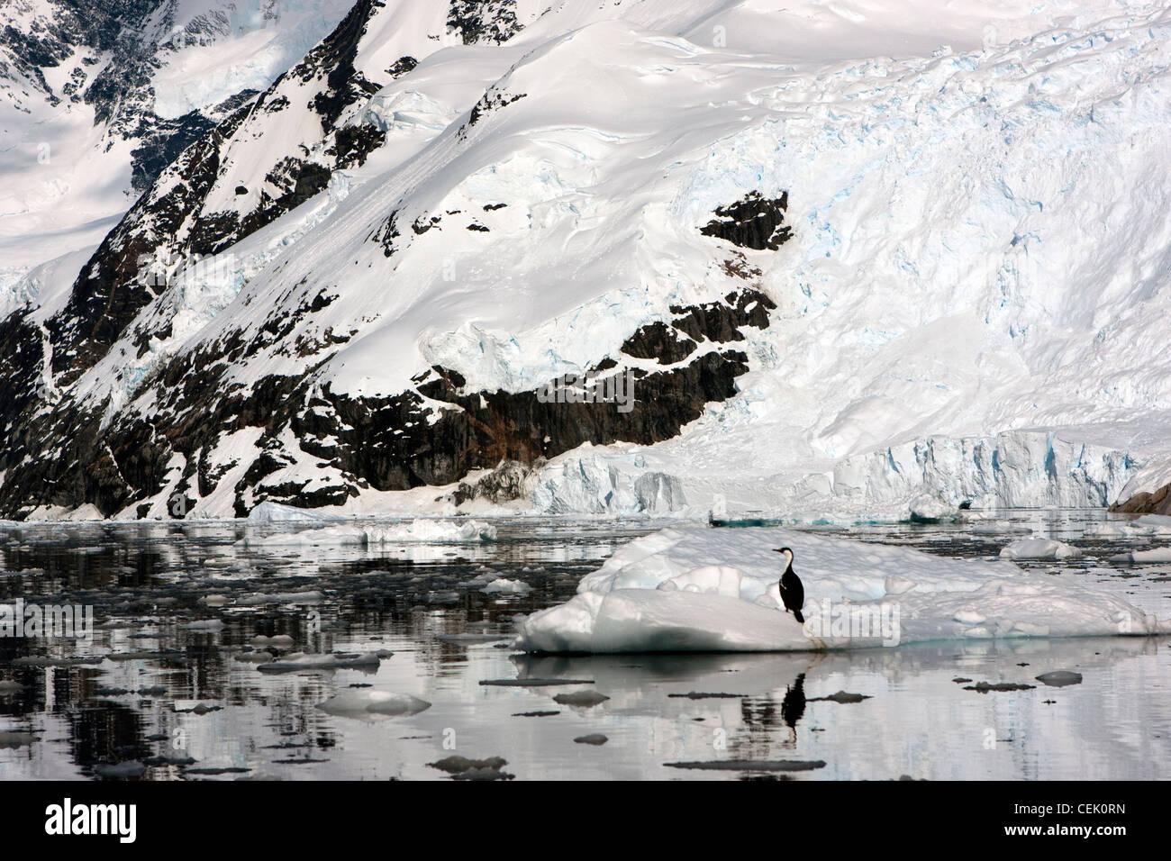 La montagne enneigée en Antarctique avec blue eyed shag assis sur l'iceberg Banque D'Images