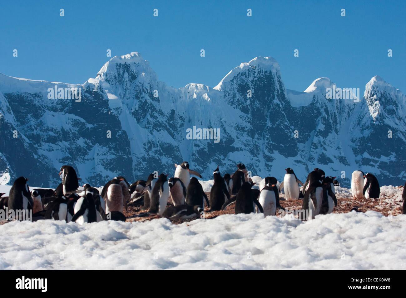 Pingouins en face de montagnes accidentées en Antarctique Banque D'Images