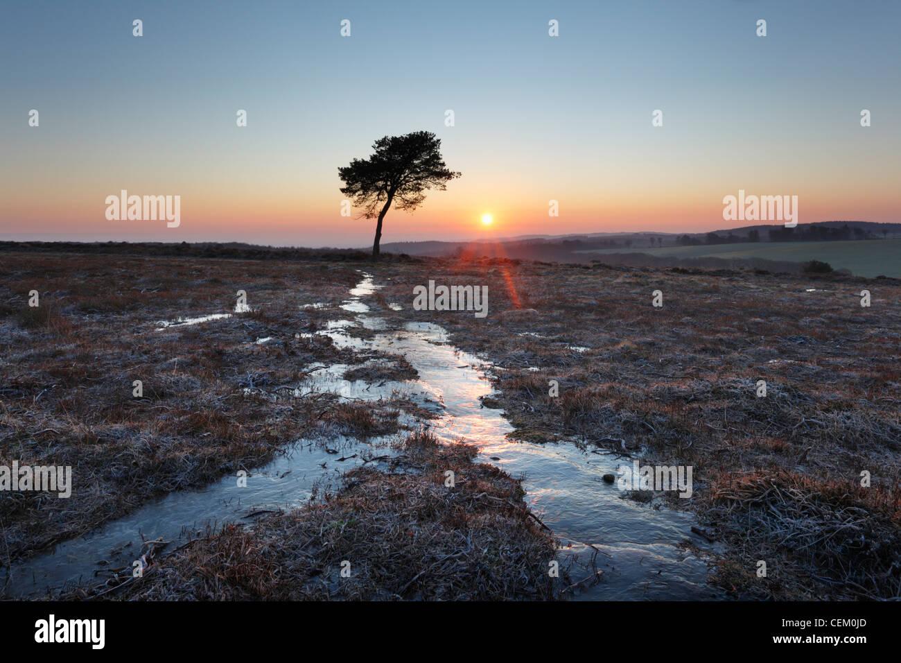 Lever du soleil d'hiver sur la Colline noire. Les collines de Quantock. Le Somerset. L'Angleterre. UK. Photo Stock