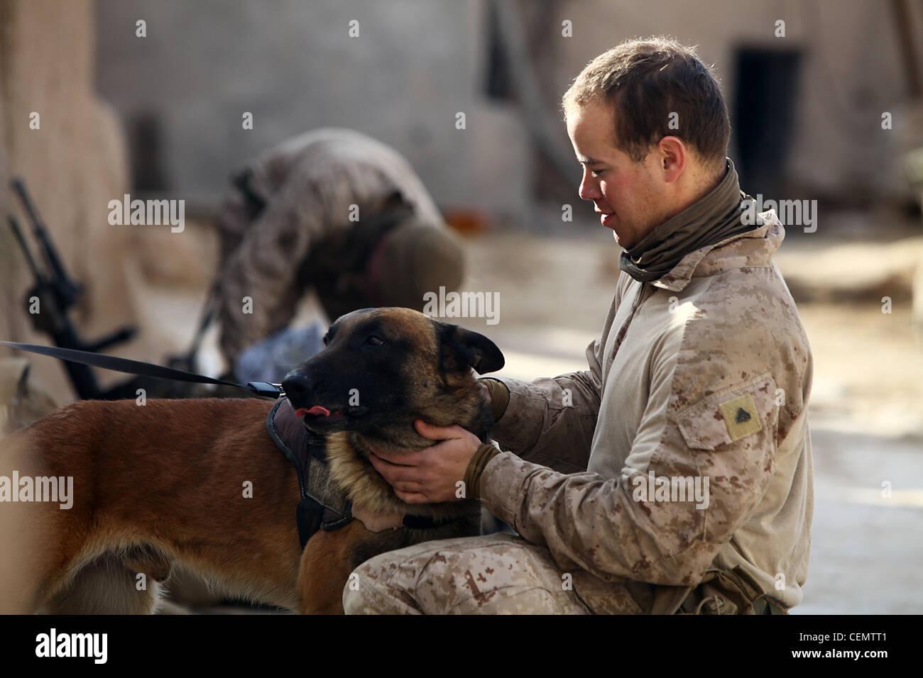Im juste un amoureux des chiens, troy est un grand chien, le cpl. javier gandia a dit, 22, chef d'équipe Photo Stock