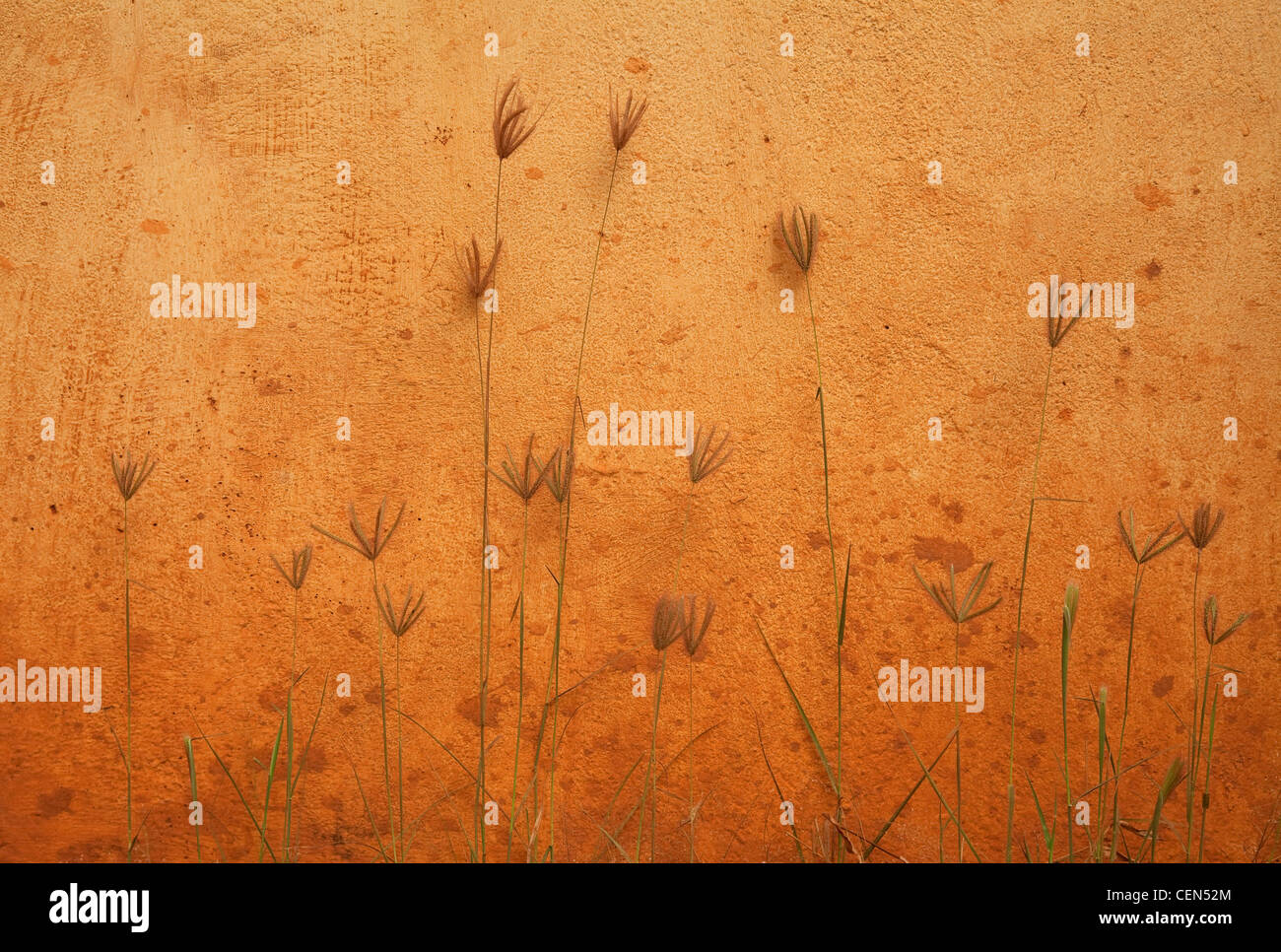 mur et plantes Photo Stock