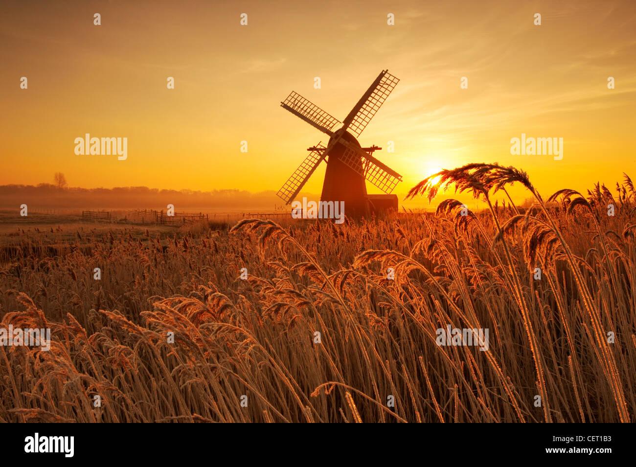 Un lever de soleil brumeux de roseaux et d'Herringfleet givré de givre de moulin dans le Suffolk. Banque D'Images