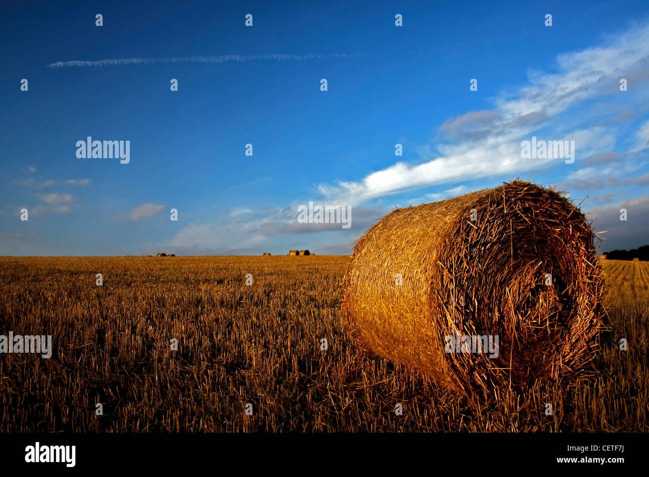 Ciel bleu, plus de balles de foin rondes sur les champs récoltés dans Yorkshire du Nord. Photo Stock