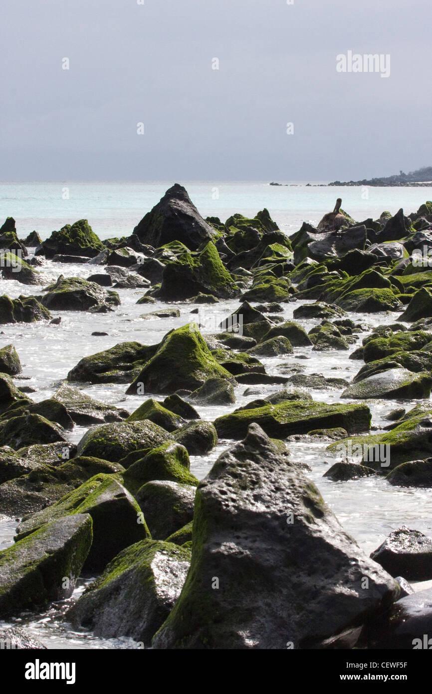 Ocean shore roches couvertes d'algues dans les îles Galapagos Banque D'Images