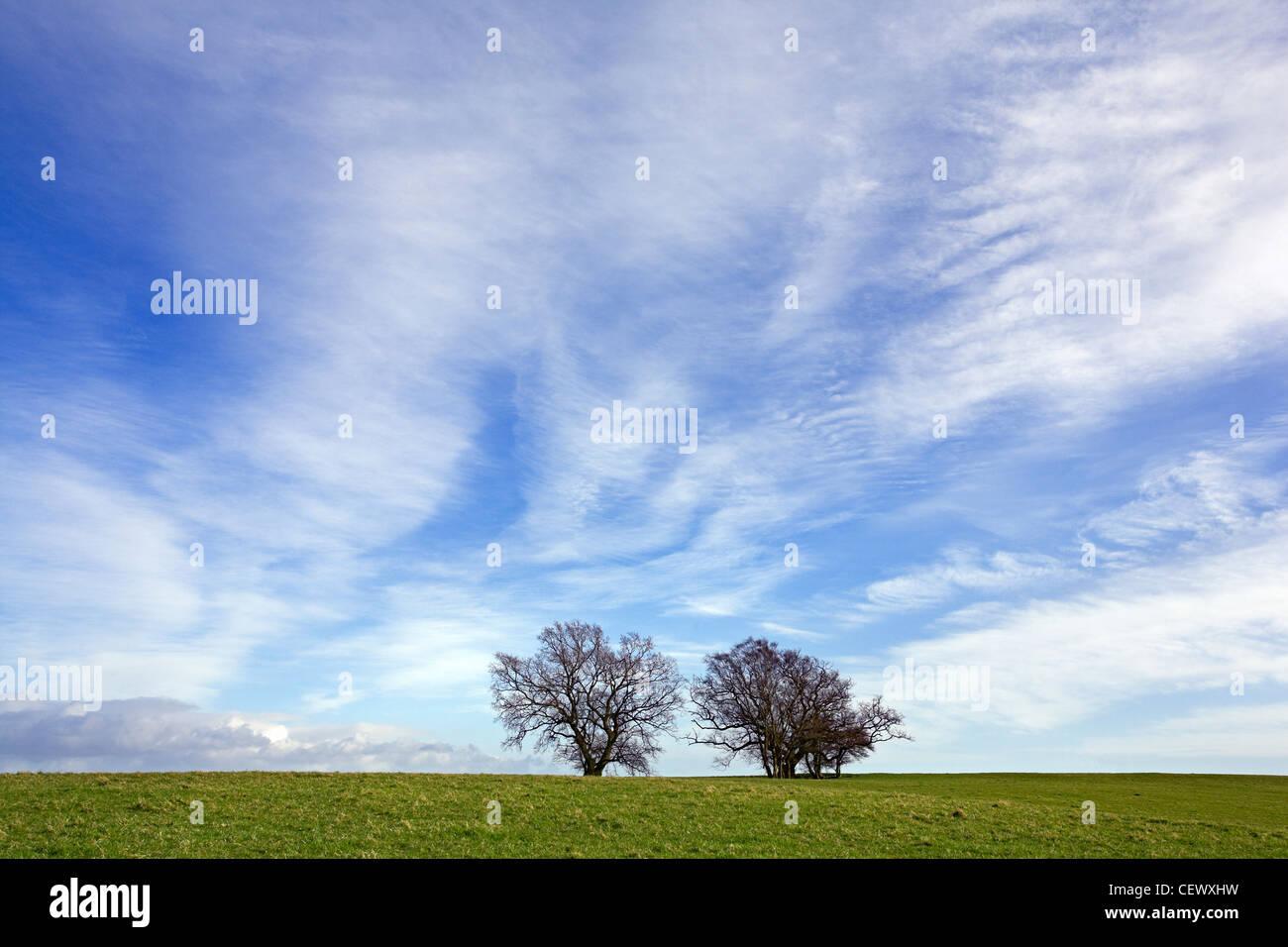 Deux arbres dans les champs ouverts sous un ciel de compensation. Banque D'Images
