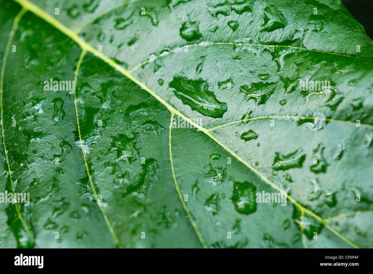 Libre d'une feuille avec des gouttes de pluie sur le abrégé nature background Photo Stock