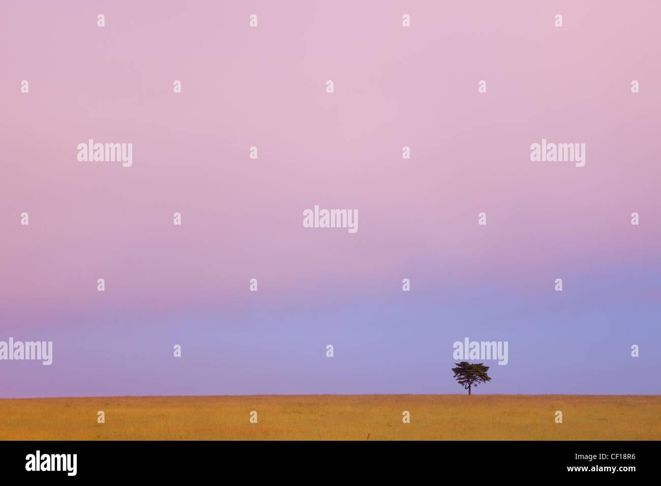 Un arbre isolé contre l'horizon au coucher du soleil; le Kenya Banque D'Images