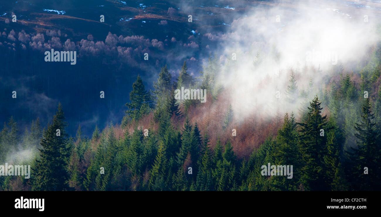 La brume s'élève de woodland près de la rivière Garry, par le col de Killiecrankie. Banque D'Images
