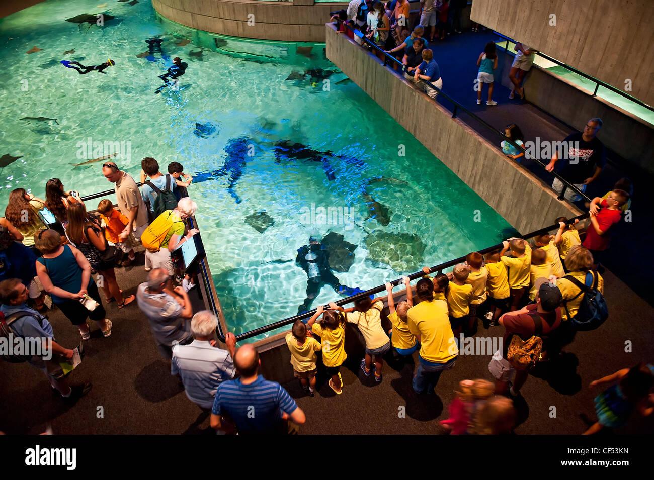 L'aquarium national, inner harbor, Baltimore, Maryland, USA Photo Stock