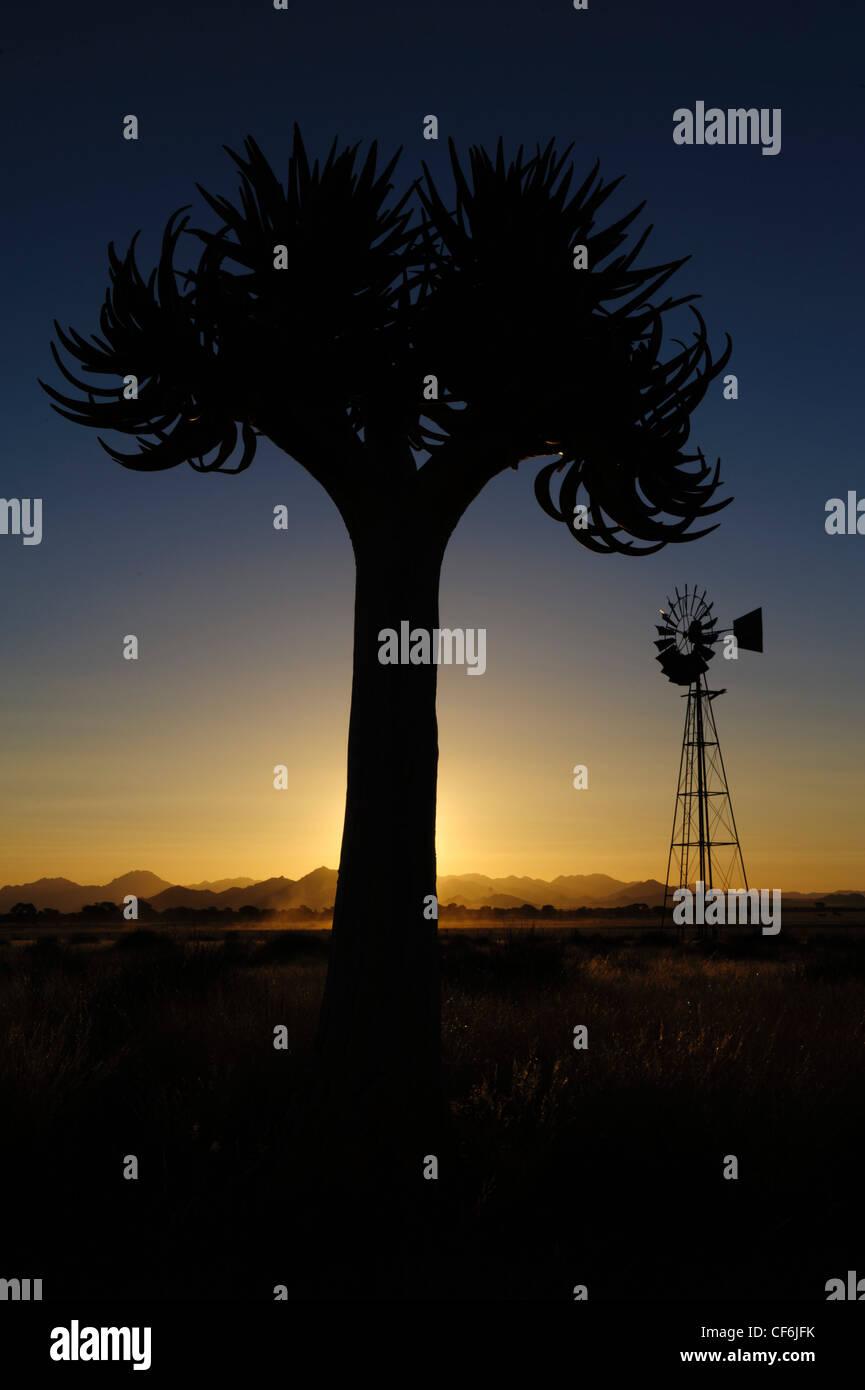 Qiuver tree (Aloe dichotoma) et le moulin au coucher du soleil, Désert du Namib, Namibie. Photo Stock