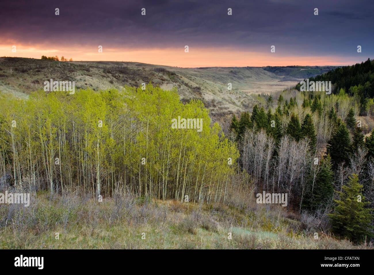 Le lever du soleil sur les tremblaies à Big Hill Springs Provincial Park, Cochrane, Alberta, Canada Photo Stock