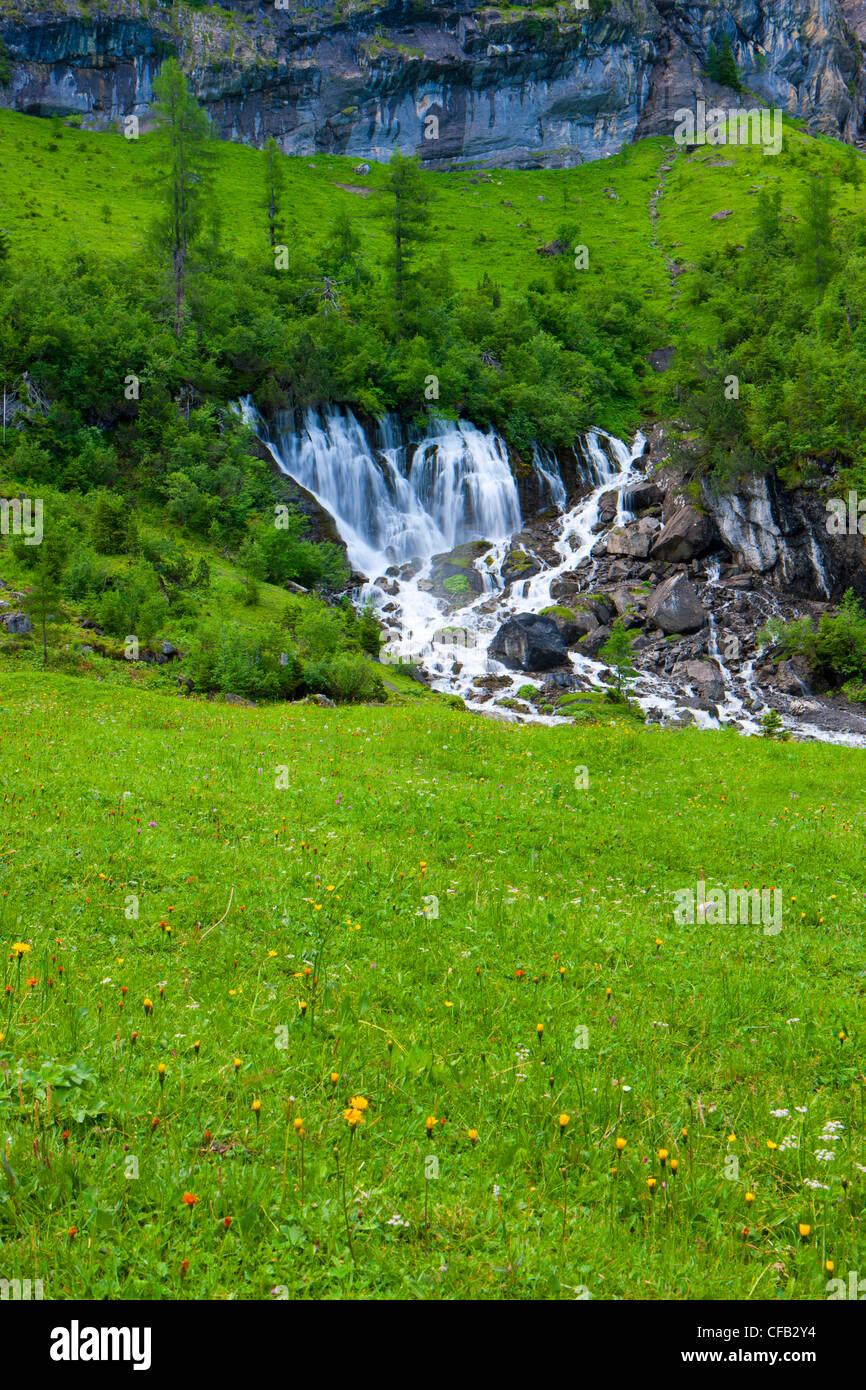 7 puits, Sieben Brunnen, Suisse, dans le canton de Berne, Oberland Bernois, Simmental, pâturage, saule, bois, forêt, printemps, sourc Banque D'Images