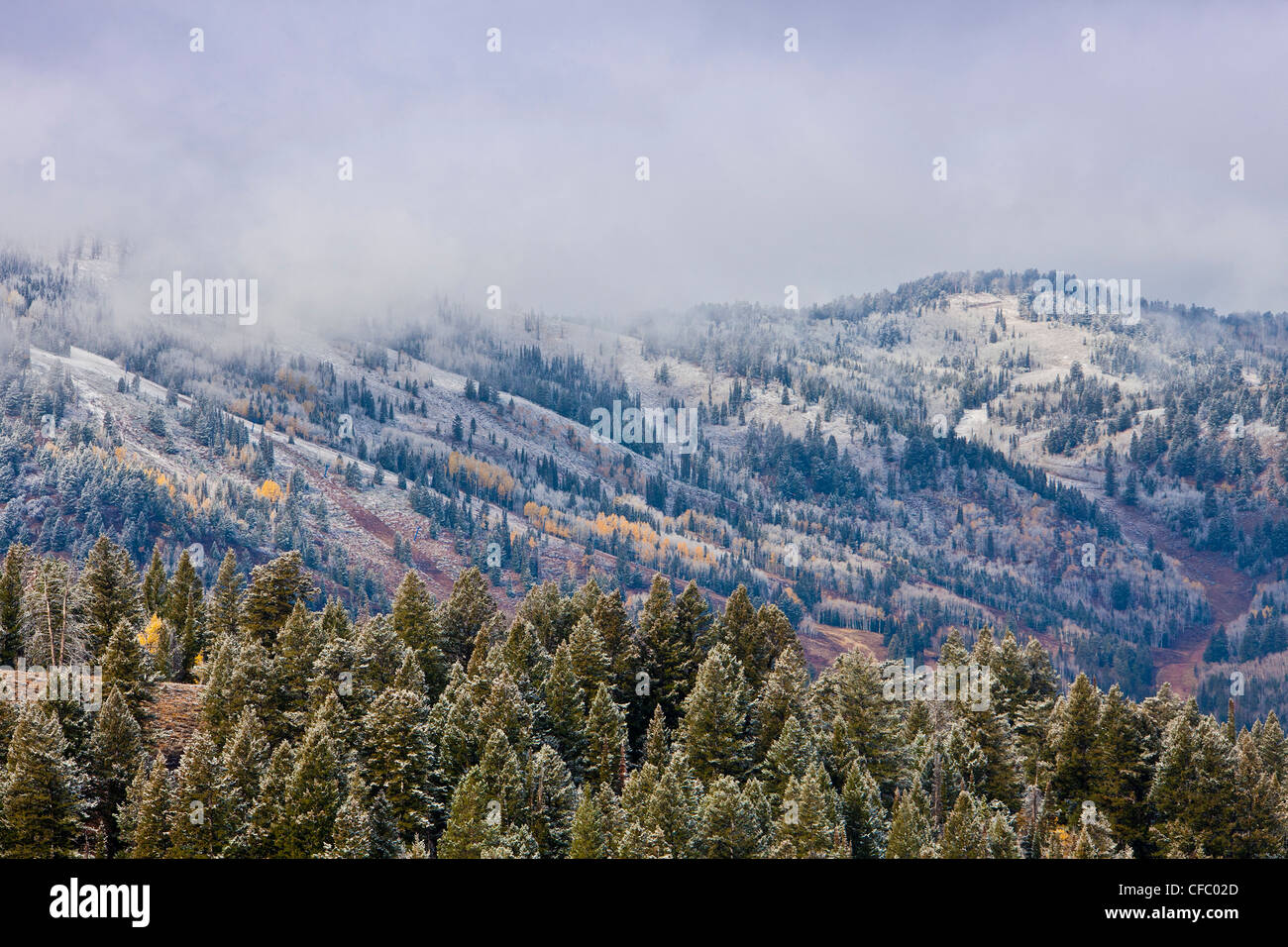 USA, United States, Amérique, Wyoming, froid, première neige, brume, brouillard, neige, sapins, neige, Photo Stock