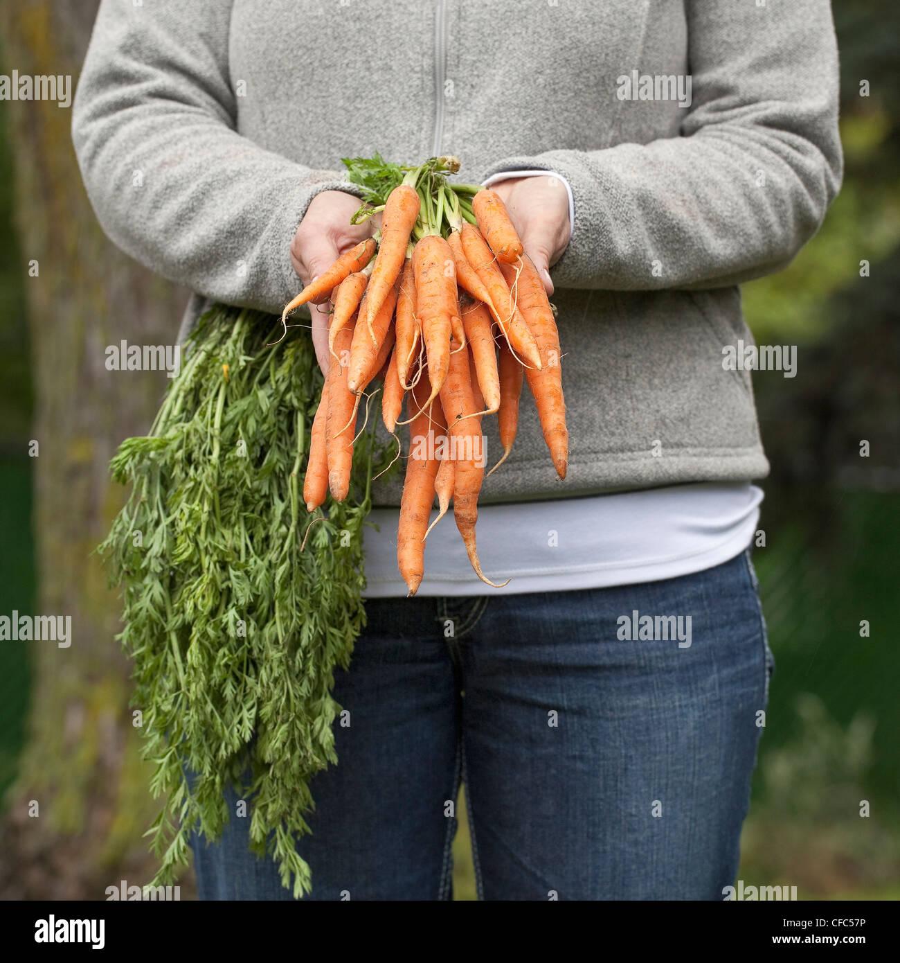 Femme tenant un bouquet de carottes biologiques frais. Winnipeg, Manitoba, Canada. Photo Stock
