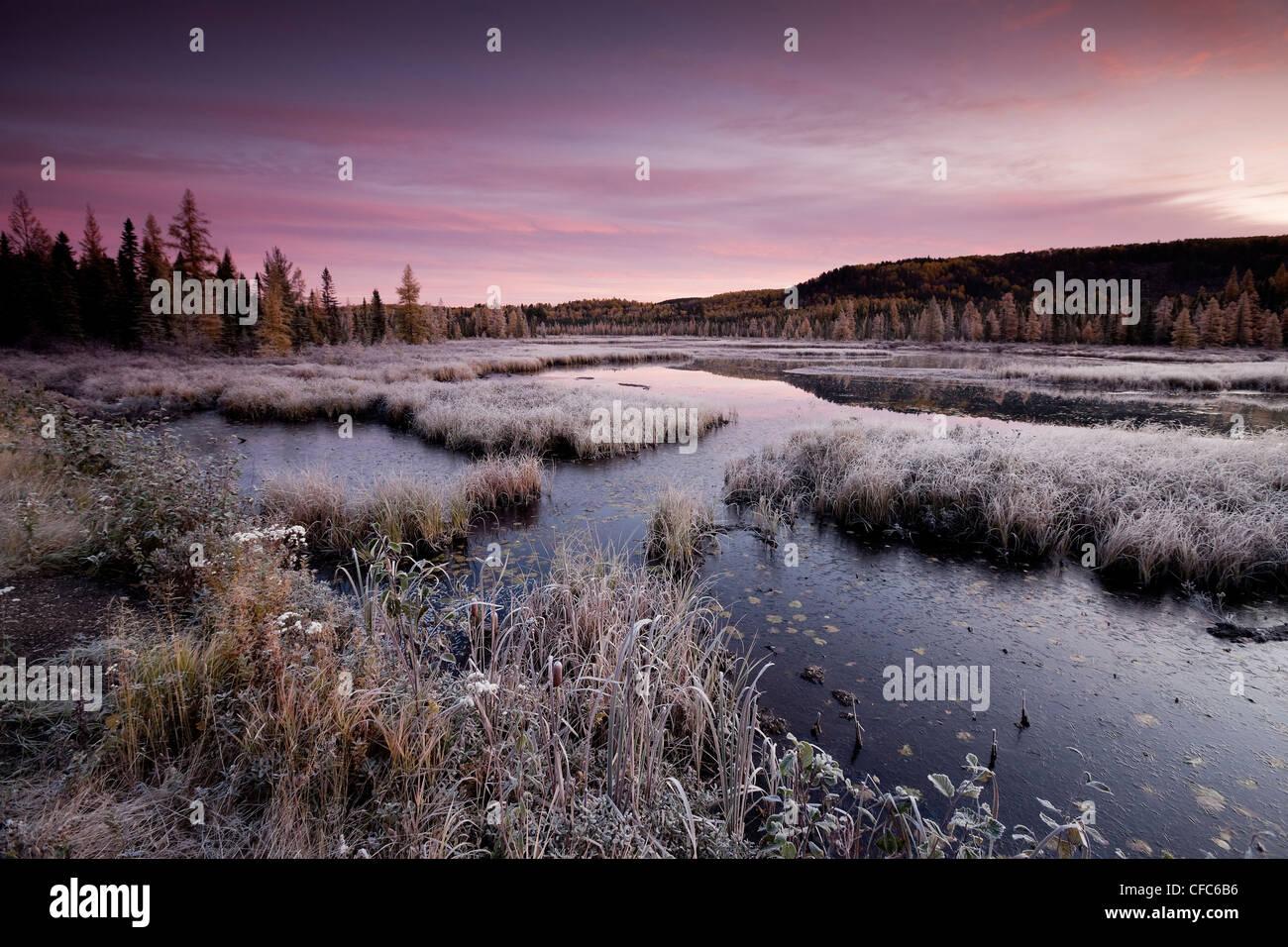Ciel rose givrée première lumière matin d'automne Photo Stock