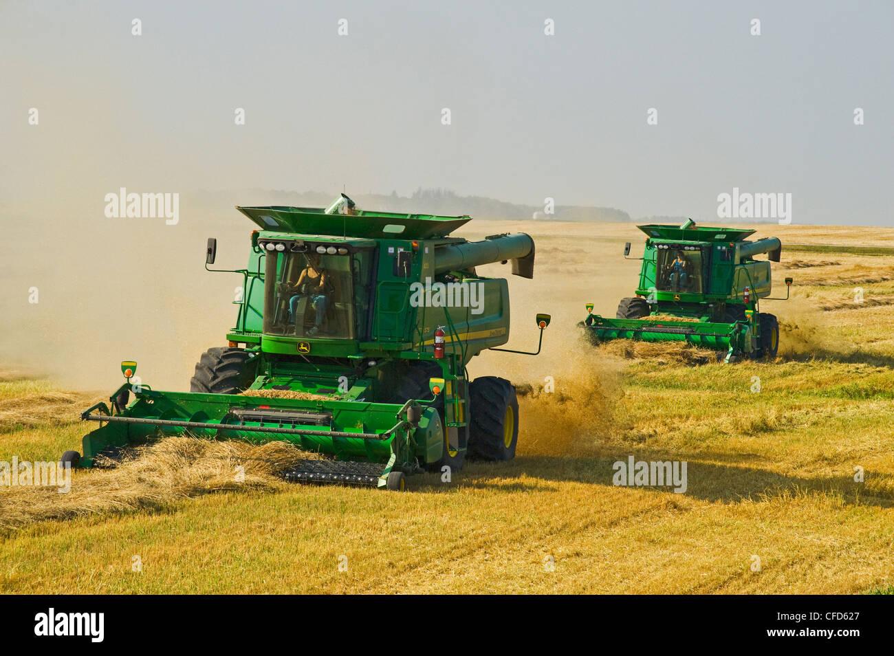 Exploitation des femmes au cours des moissonneuses la moisson du blé de printemps près de Somerset, Manitoba, Photo Stock
