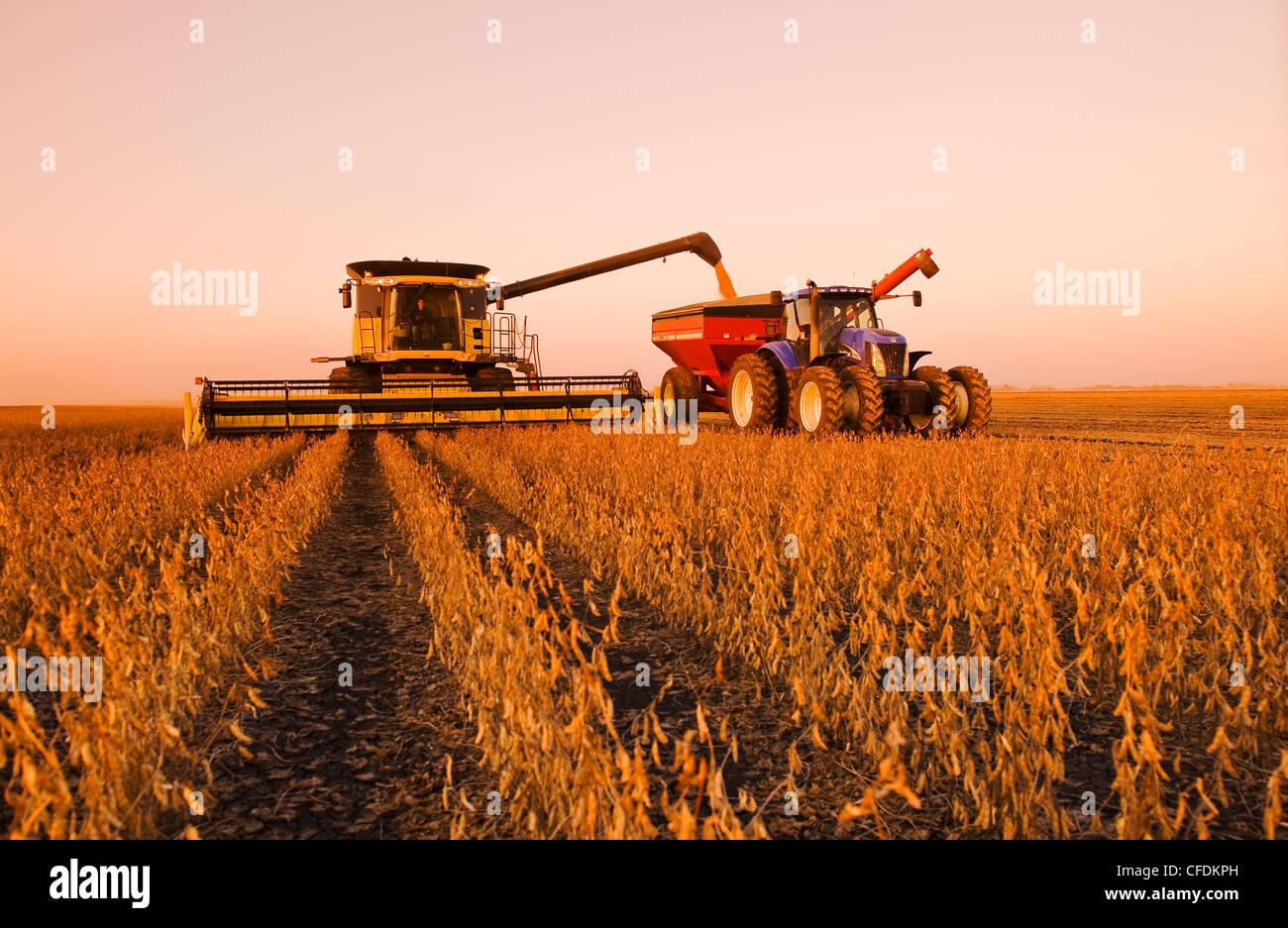 Une moissonneuse-batteuse se jette dans un wagon de grain sur le rendez-vous au cours de la récolte de soja, Photo Stock