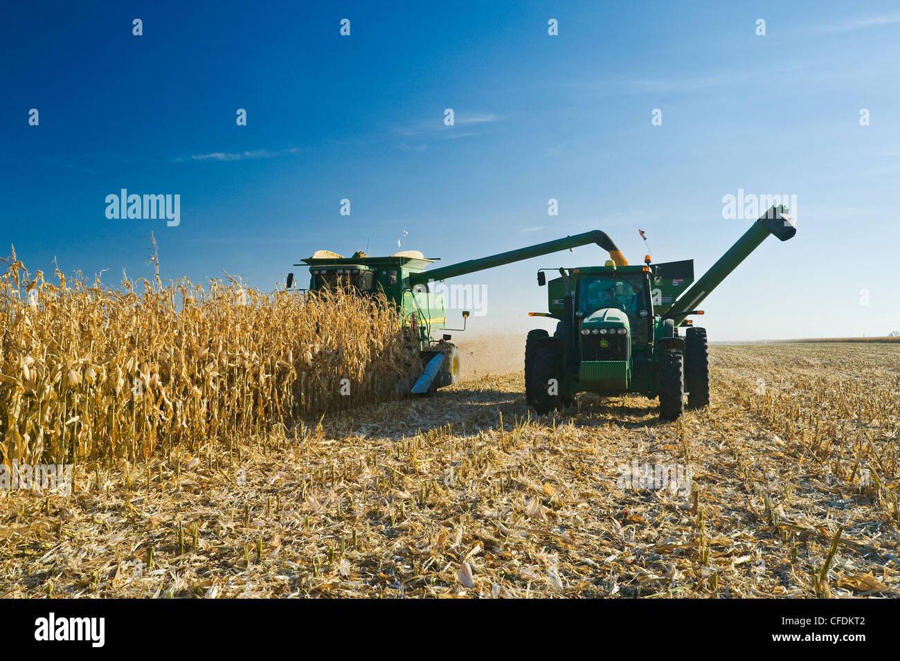 Une moissonneuse-batteuse se jette dans un wagon de grain sur le rendez-vous au cours de la récolte de maïs Photo Stock