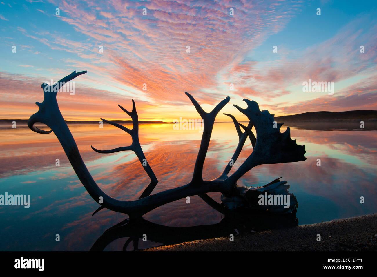 Bois de caribou (Rangifer tarandus) et le lever du soleil, d'automne, Toundra Arctique centrale des Territoires Photo Stock