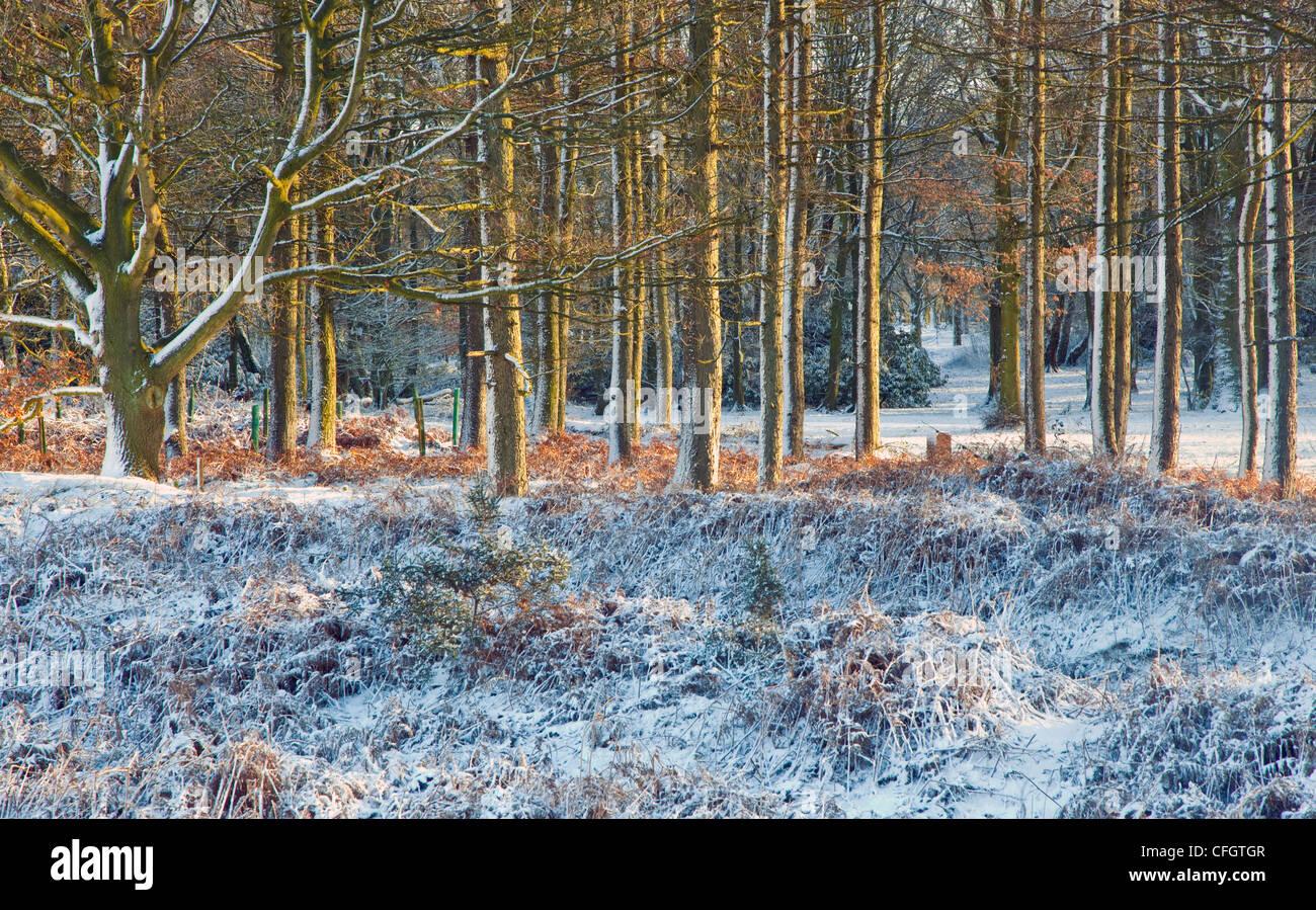 Les fortes gelées de la mi-hiver de l'AONB Cannock Chase (région de beauté naturelle exceptionnelle) Photo Stock