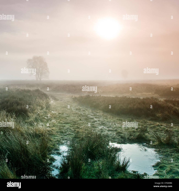 Sunrise Morning Mist sur Cannock Chase AONB (région de beauté naturelle exceptionnelle) dans le Staffordshire Photo Stock