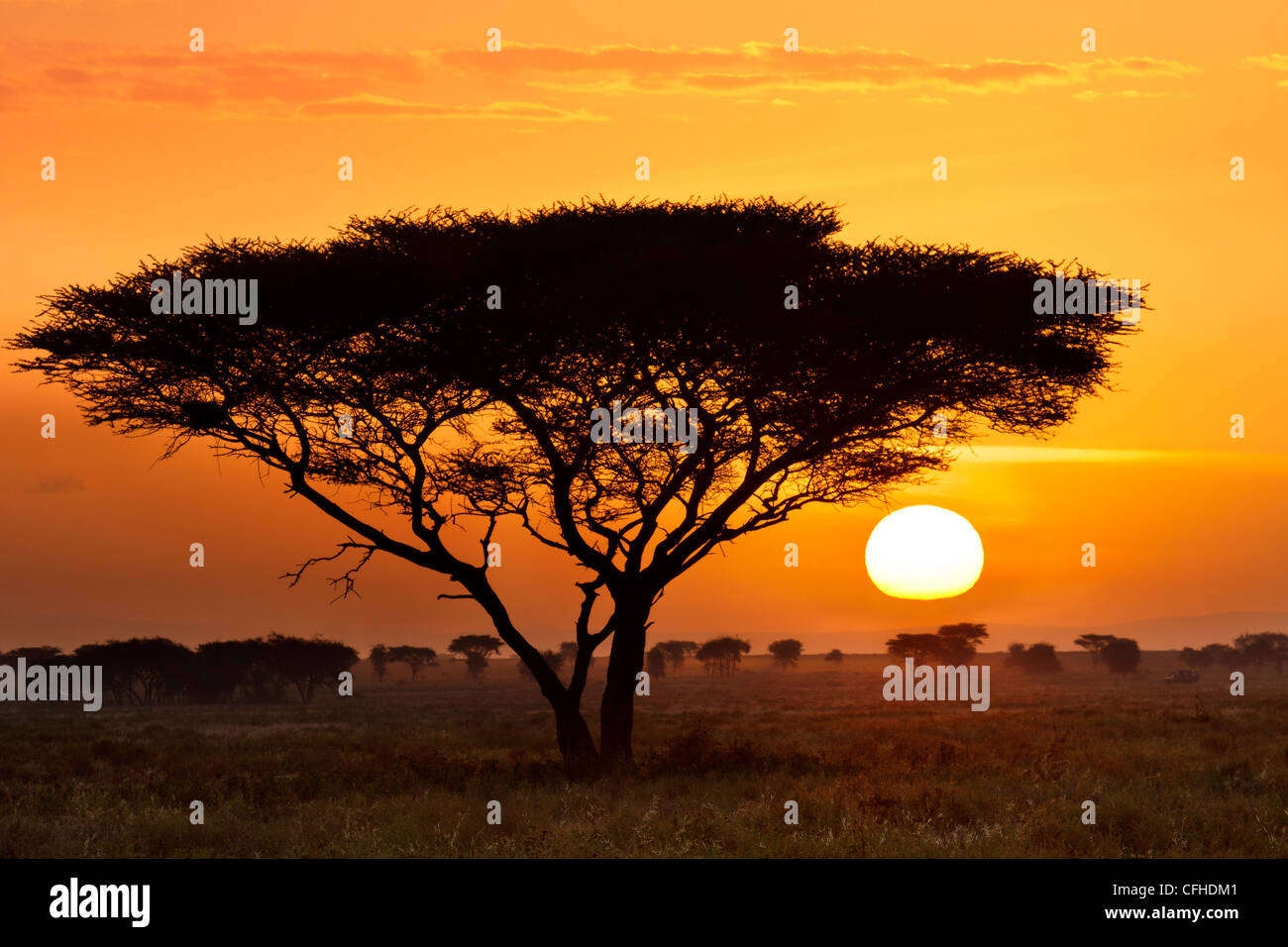 Coucher de soleil Serengeti Photo Stock
